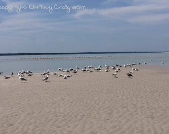 Seagulls Chapin Beach - Dennis, MA