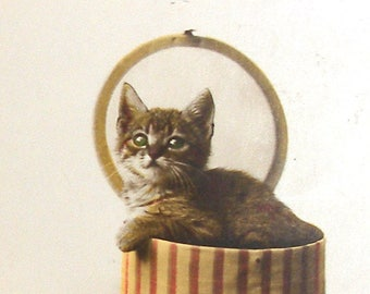 1920s French postcard, Kitten in a box, RPPC real photo postcard.