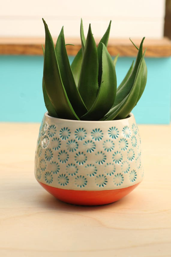 flower cactus pot