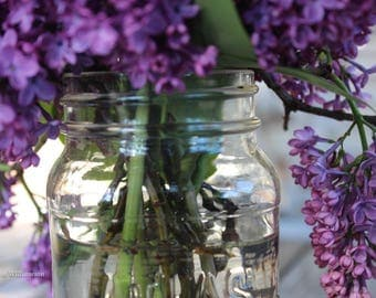 Lovely Lilac Morning —Photo Print or Canvas Gallery Wrap