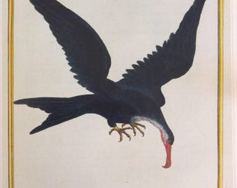 Magnificent Frigate Bird,  1990s Reproduction Colorplate, Book Plate, 10 x 14 in. Book Page Print, Bird Print, Ornithology Print