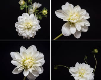 Dahlia Photograph, Flower Wall Art, Floral Print Set, Nature Prints, Botanical Photography,  black and white, pale yellow, light green decor