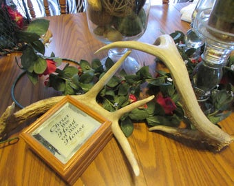 Free Shipping! Pair of 2 Real Deer Antlers Naturally Distressed Wedding Table Decoration Large Shed Authentic Whitetail Horns 4/4 Point A15