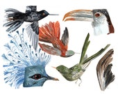 Custom: Natural History Birds for Sarah