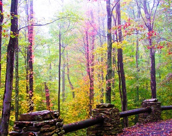 Fall in the Forest  16x20  Creative  artwork from Hawks Nest  West Virginia