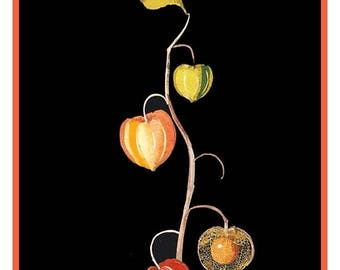 GREAT SALE Mary Delany's Winter Cherry Chinese Lantern Flowers  * from Paper Mosaics* Counted Cross Stitch Chart / Pattern