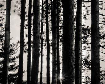 cooper lake sunset, 8x10 fine art black & white photograph, nature