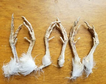 Naturally Dried Adult Quail Feet - CRUELTY FREE - 3 Pairs