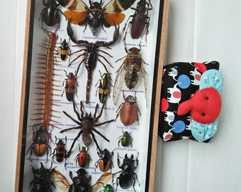 Mix Real Rare Big Set Stick Bug Bugs Insect Insects Framed Box Display Taxidermy Spider Gideon Jewel Dung Beetle Cicada Scorpion Entomology