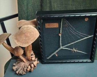 Arachnid Specimen. Steampunk Spider with Web in Shadow Box