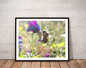 bee photography print /  ...