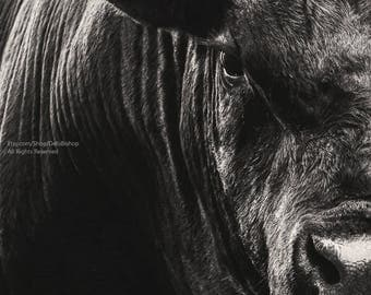 Big Black Angus Bull Black And White -Abstract Animal Portrait -Cow Wall Art -Farm & Ranch Art -Veterinarian Wall Decor -Fine Art Photograph