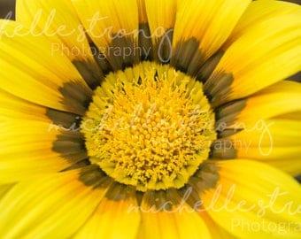 Yellow Gazania Flower Print, Botanical Garden Photography, Macro Photography, Nature Images, Botany, Garden Prints, Digital Download, Floral
