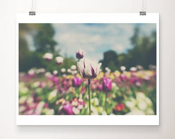 white tulip photograph flower photograph english garden photograph tulip print nature photography flower print english garden print