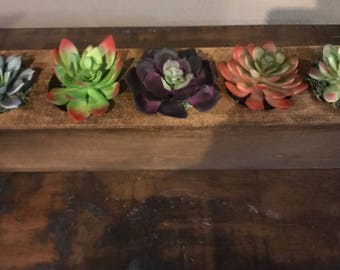 SUCCULENTS for Sugar Mold