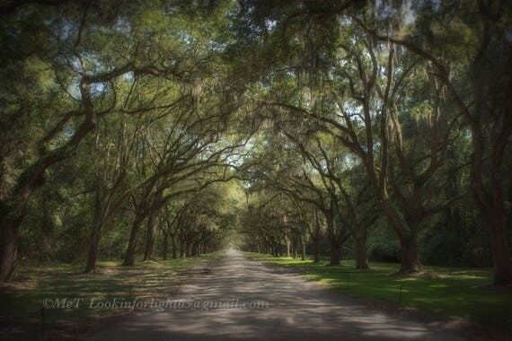 Avenue of the Oaks | Savannah Georgia Art | Tree Photography | Live Oak Tree Art | Spanish Moss | Enchanted Forest Art | Wormsloe Plantation