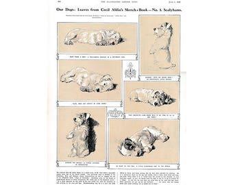 Cecil Aldin Print, Sketch Book No. 3, Sealyhams, Illustrated London News, Sealyham Terrier, Dog Art, 1920s