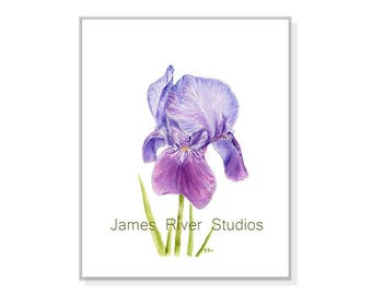 Iris Watercolor Iris Painting Iris Art Iris Print Iris Wall Decor Iris Wall Art Purple Iris Blue Iris Decor Iris Poster Iris Large Print.