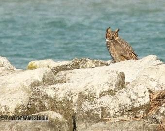 Great Horned Owl Photo | Nature Photography | Owl Decor | Bird On Rocks Art | Raptor Photography | Home Office Studio Lake Art | Owl Print
