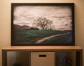 24 x 36 in Framed Photo Of A Tree At Malibu Creek