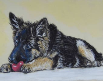 Puppy Love - German Shepherd puppy - Limited Edition Mounted A3 print of beautiful german shepherd at play