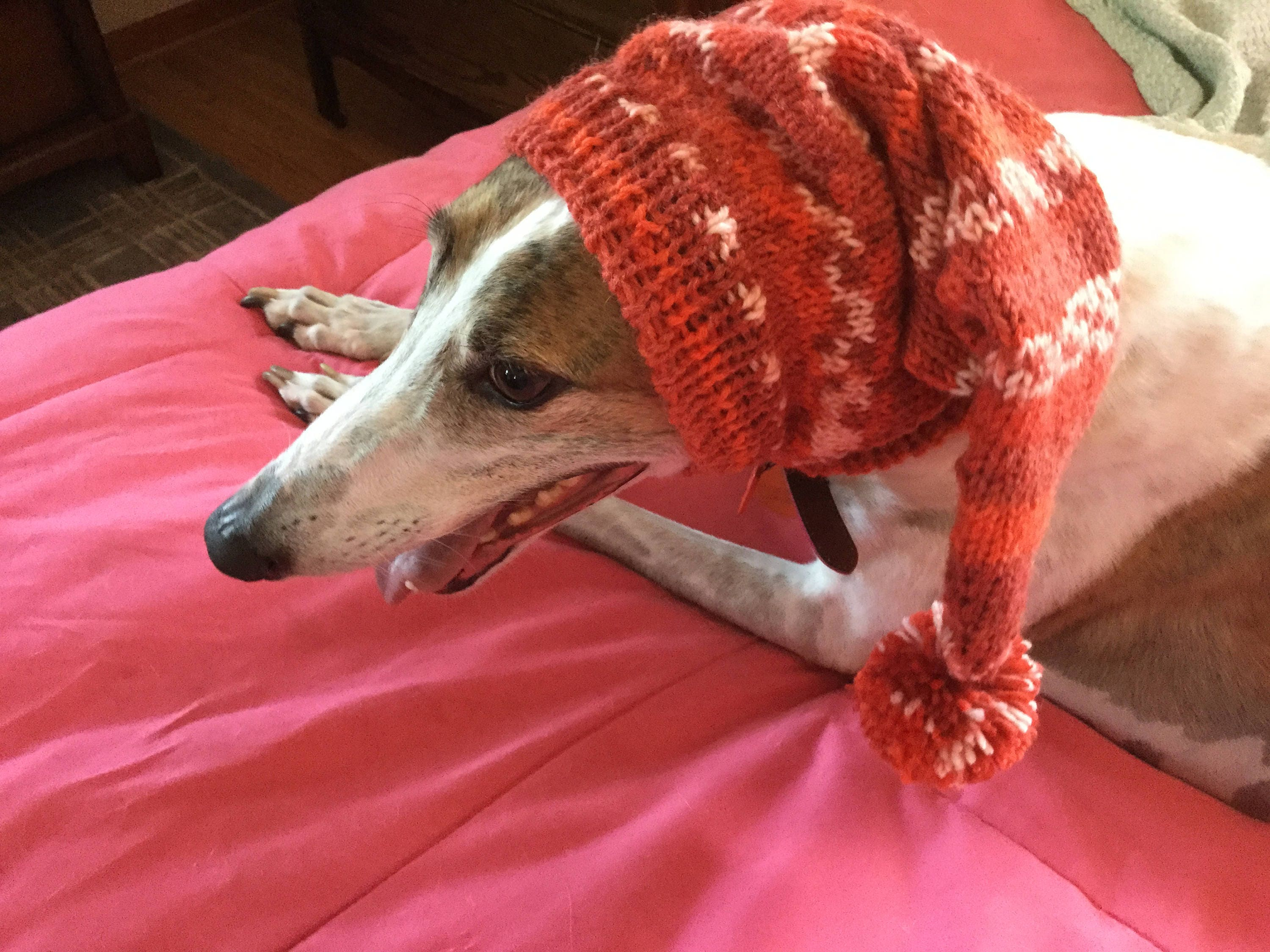 Pointed hat with snood for greyhound or other large sighthound pointed hat with snood for greyhound or other large sighthound fair isle pattern chile pepper bankloansurffo Images