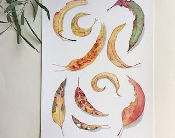 A3 print: Gum leaves watercolour print - modern botanical print A3 - Australian watercolour eucalyptus leaves - nature art print