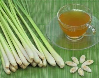 Herbal Tea Lemongrass and Fragrant Pandan Tea . Aromatic and Good for Treating Gout. 100g.