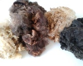 Reserved for Tamar - Raw Fiber - Sampler Pack - Homegrown Fleece - Organic Fiber - Wool - Raw Wool