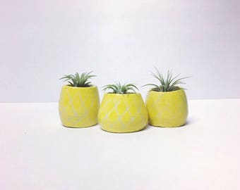 Pineapple Air Plant Holder - Planter - Pineapple Planter - Airplant Pot