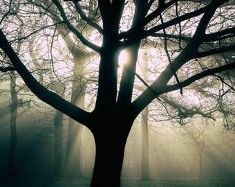 Haunted - Fine art photography print