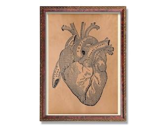Heart poster Anatomy print Medical decor