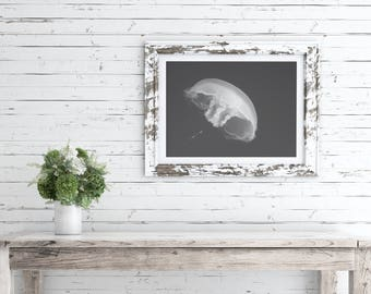 Nature wall art, giclee print, fine art photography, black and white, home decor ideas, jellyfish painting, bathroom wall art, gifts for him