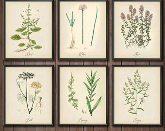 Kitchen Herb Wall Art Set - SET OF 6 - Kitchen Decor Set Herbs - Kitchen Herb Print Set - Kitchen Art Print Set - 2406