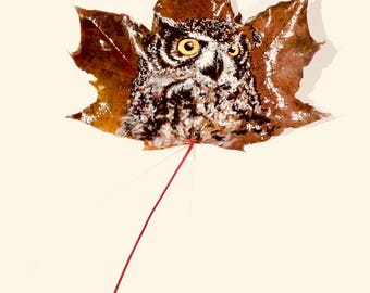 Owl painted leaf