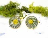 Daisy cufflinks, Real Flower cuff-links, Nature cufflinks, Fathers Day Gift, Gifts for Him, botanical gifts, Valentines, Anniversary gift