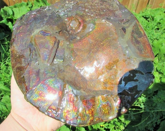double sided ammonite fossil
