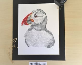 Puffin Drawing Fine Art Print: Pen and Ink & Colour Pencil Bird Illustration, Mounted Wall Art, Fauna Traditional Art, Wildlife