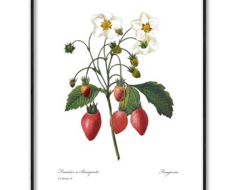 Wild Strawberry Art, Instant Digital Download Print (Printable Kitchen Decor, Red Fruit Botanical Artwork) Pierre Redoute