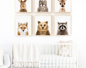 Owl Print, Woodland Animals Art, Owl Printable, Woodland Nursery Art, Owl Photography, Owl Wall Art, Kids Room Owl Photo, Kids Room Wall Art
