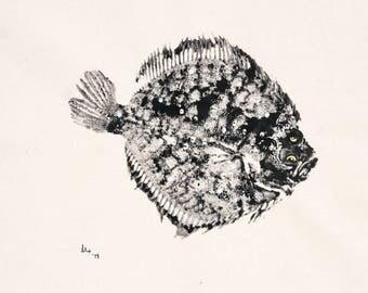 Sole Fish Print S5