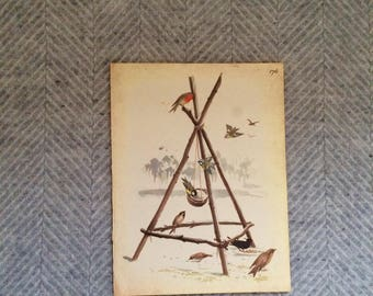 Genuine vintage framed botanical drawing, flower illustrations, print, floral, glass frame, double sided birds mistletoe christmas
