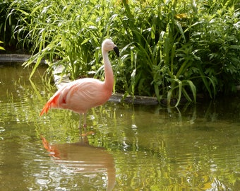 Photo Note Card-Pink Flamingo