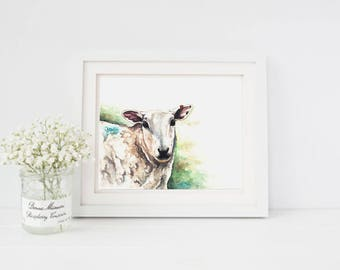 Sally the Sheep