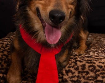 T2 red dog collar