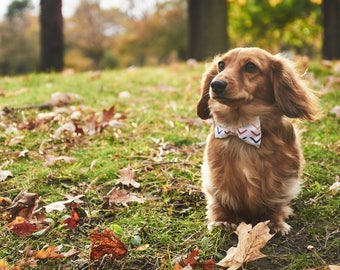 Dog Bow Tie | Follow Me | Free Shipping to Canada