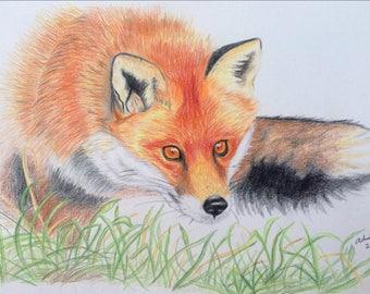 Fox - Hand drawn, Colored Pencils Art