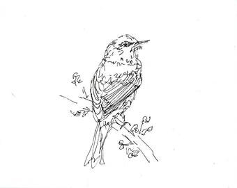 Sketchbook Sale - Bird #1 Original Ink Line Drawing - 8x10 Songbird Original Art