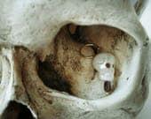 Carved Pearl Skull
