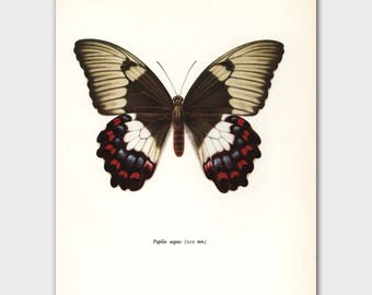 """Monarch Butterfly Art (Nature Decor, Bedroom Wall Art) Vintage Butterfly Print --- """"Orchid Swallowtail"""" No. 78-1"""